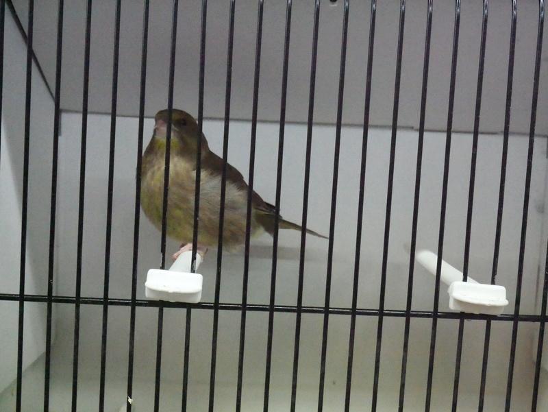 Concours Eurobird P1000814