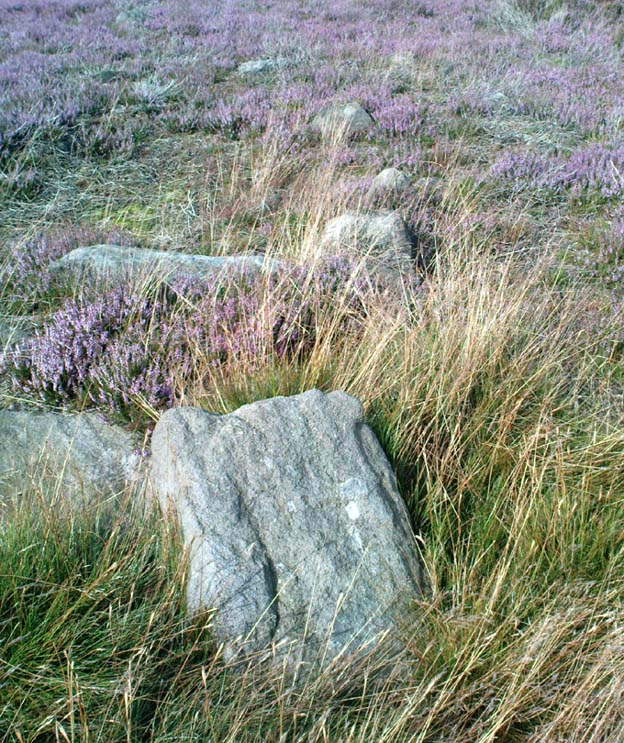 ...another Unrecorded Cup-Marked Stone on Ilkley Moor Bingle10