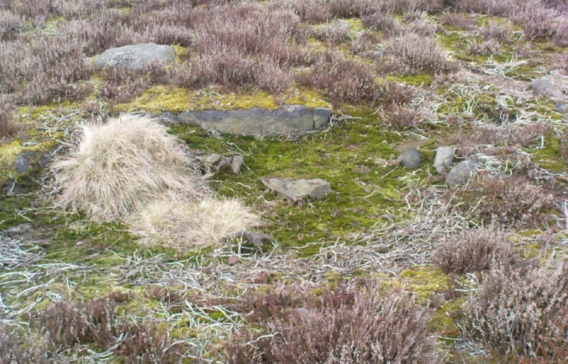 ...another Unrecorded Cup-Marked Stone on Ilkley Moor Bingle11