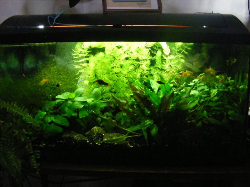 Aquarium 90L. Empoissonnement de prévu. 810