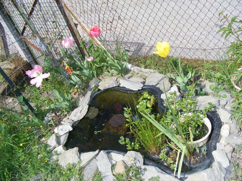 [Tutoriel]: Poissons pour petits bassins Dscf0810