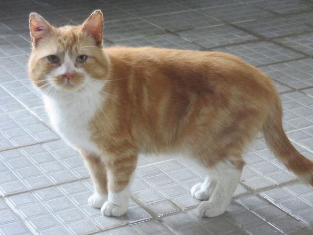 Garfield, mâle castré 29744411
