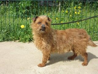 Teddy, mâle croisé yorkshire Img_2441