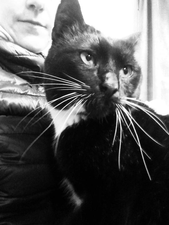 Chaussette, chat noir et blanc Img_e211