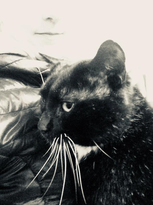 Chaussette, chat noir et blanc Img_e212