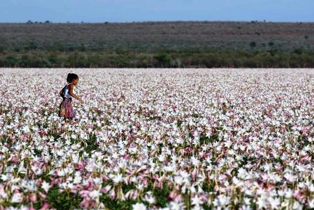 LES LYS DE SANDHOF (Namibie) Sandho10