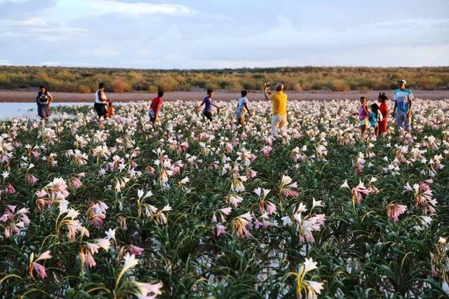 LES LYS DE SANDHOF (Namibie) Sandho12