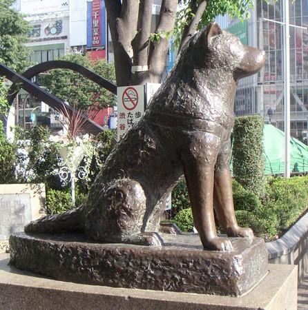 LA STATUE DE HACHIKO (Japon) Shibuy10