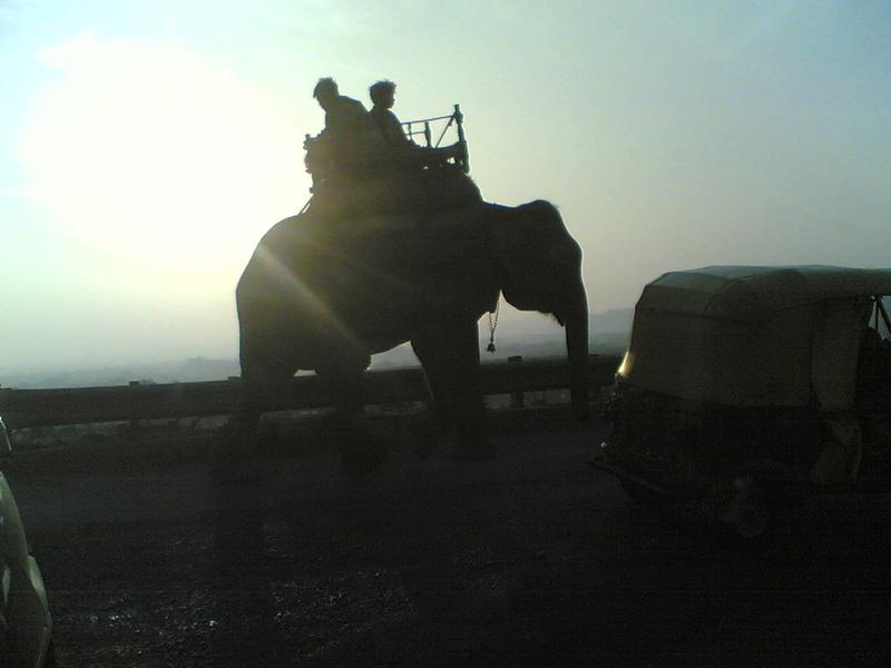 Un petit coucou d'Inde 17122010