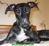 Une association pour sauver les chien d'Espagne ! - Page 2 Dama_a10