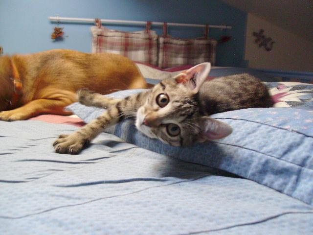 Patch et Paé, les jumeaux mouchetés Patch_20