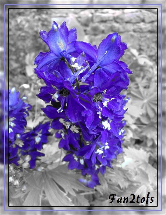 Mes photos de fleurs... 03092010