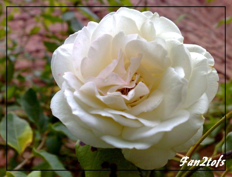 Mes photos de fleurs... 03092011