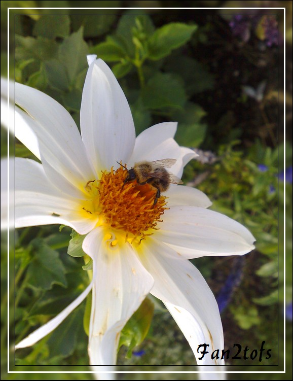 Mes photos de fleurs... 09092010