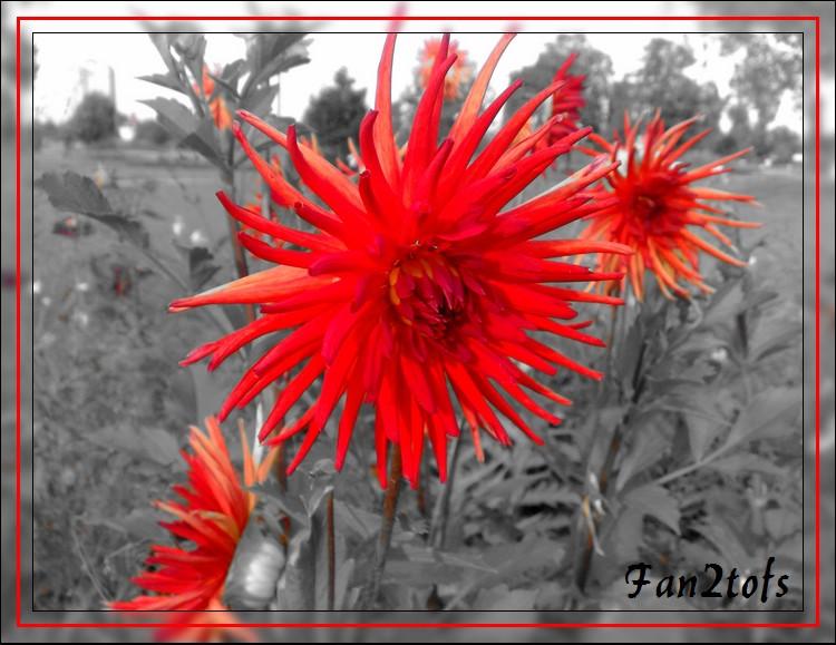 Mes photos de fleurs... 09092011
