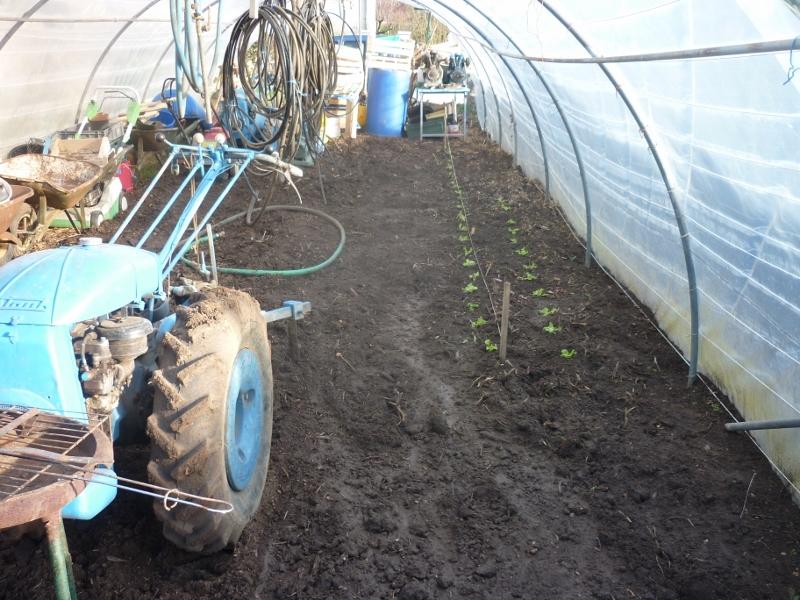 semis des plants P1180010