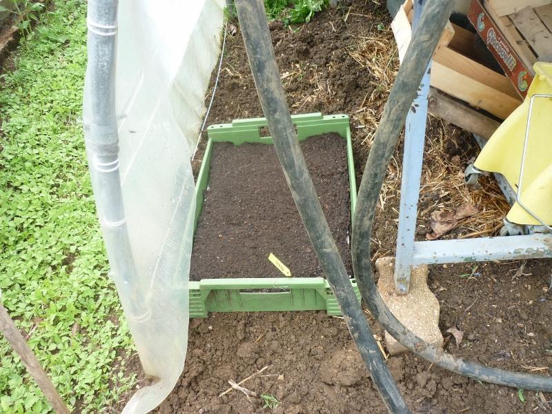 semis des plants P1180413