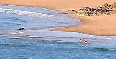 le Cap Fréhel en avril  1v4b0028
