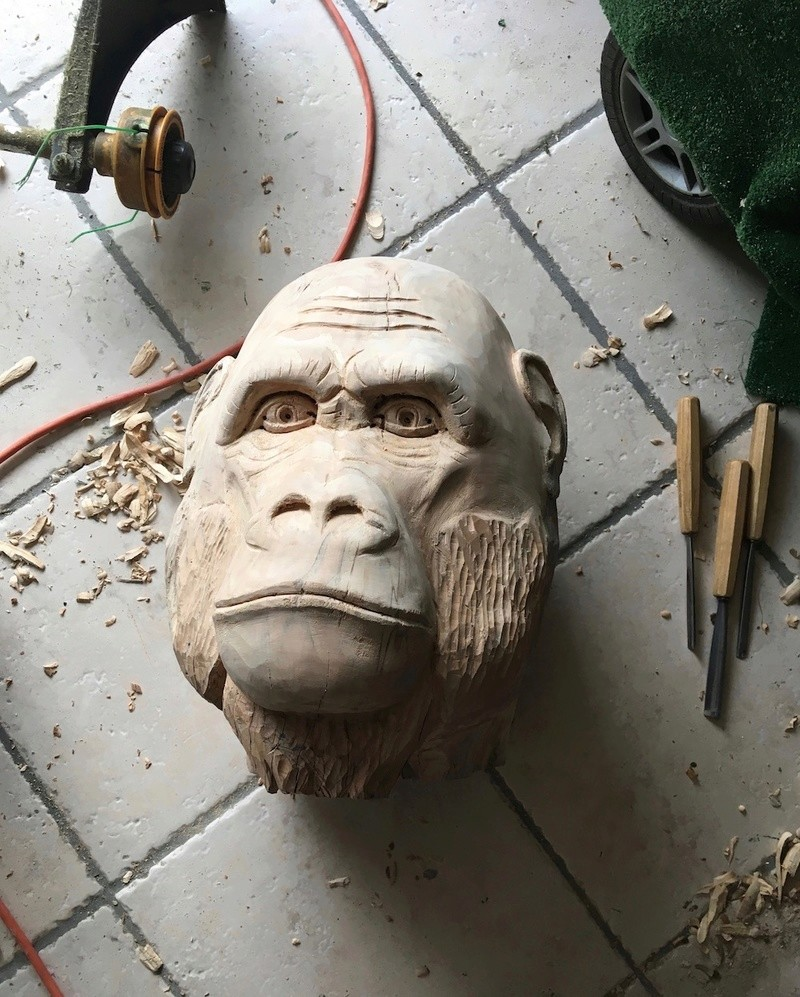 tête de singe Img_2311