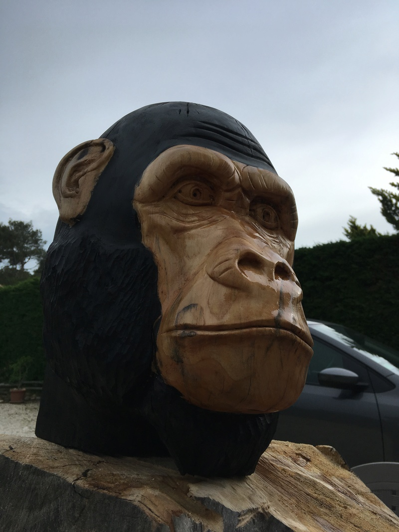 tête de singe Img_2410