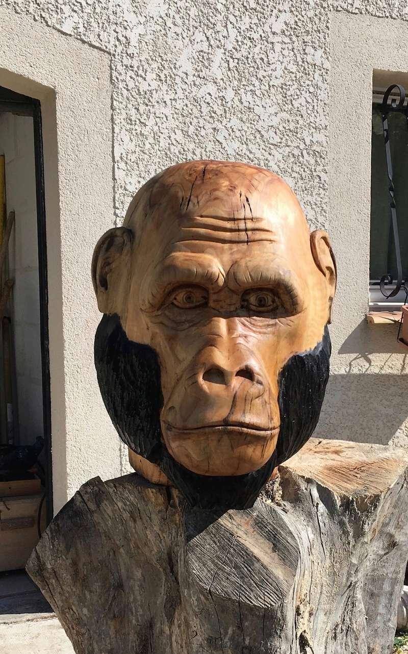 tête de singe Img_2411