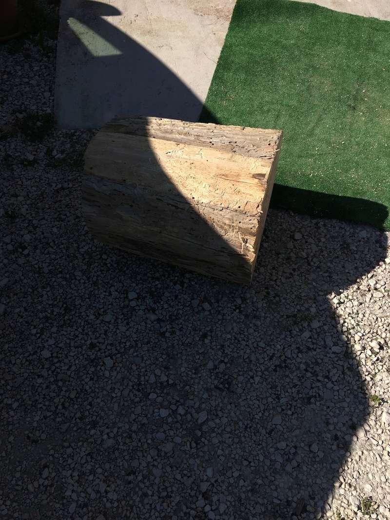 Mon nouveau morceau de bois Img_2512