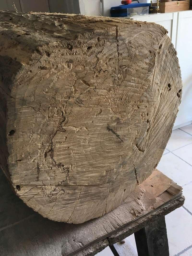 Mon nouveau morceau de bois Img_2513