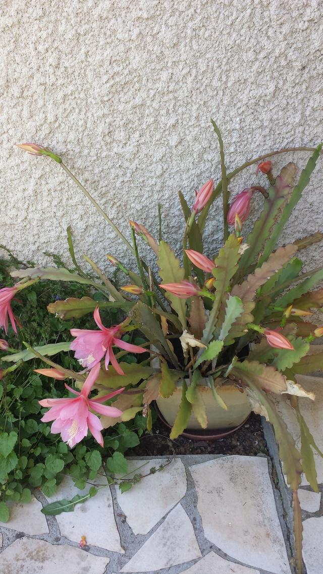 JUIN : La pluie de juin fait belle avoine et maigre foin - Page 3 Fleur_11