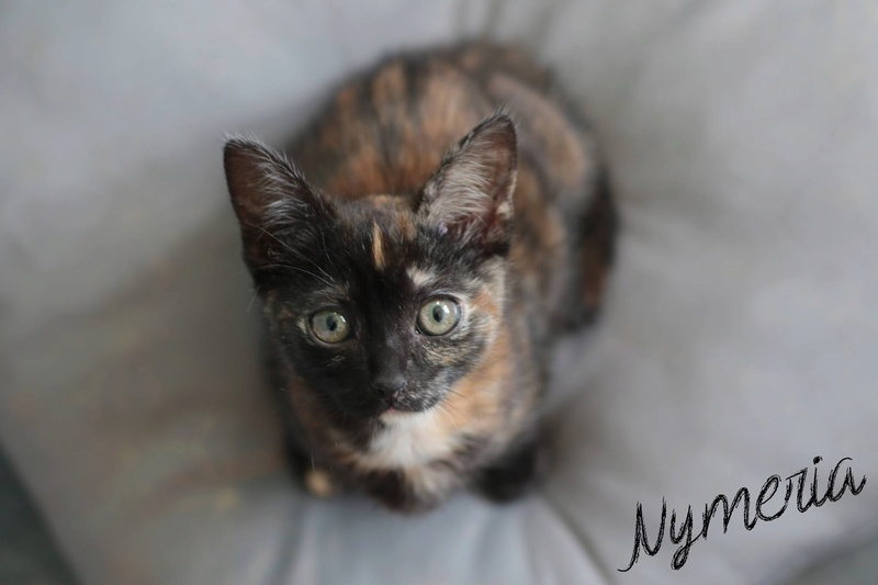 Nymeria, jolie petite écaille de tortue, née en septembre 2017 C7c43e10