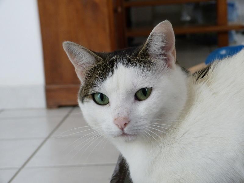Perdue chatte FARINE à Bourgbarré P1000911