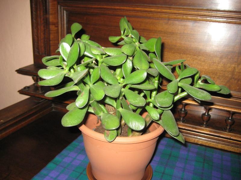 SoS plante malade 1_img_20