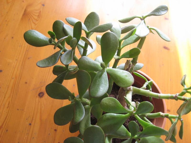 SoS plante malade Img_2812