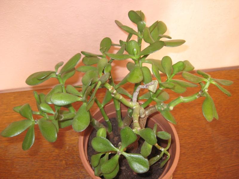 SoS plante malade Img_2813