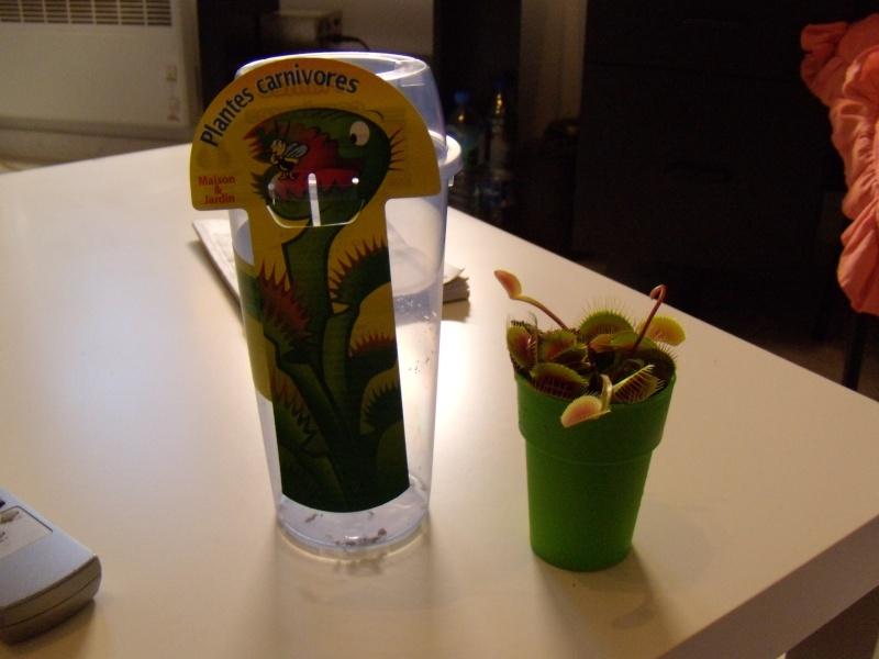 The Carrefour Dionaea Style!! Dscn1915