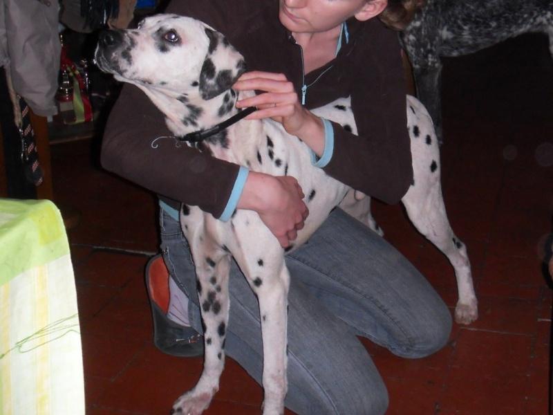 TANGO dalmatien 3 ans Tango_10