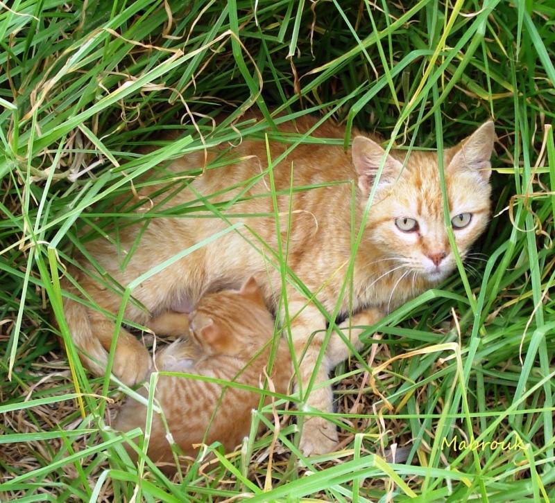 Les Chats d'Essouira Chaken10