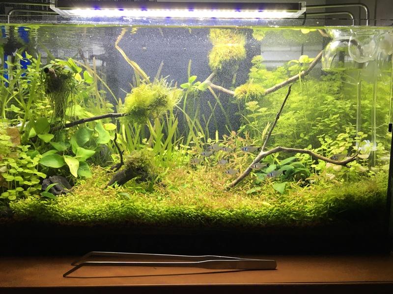 Nouvel aquarium spé RC 60L Img_3417