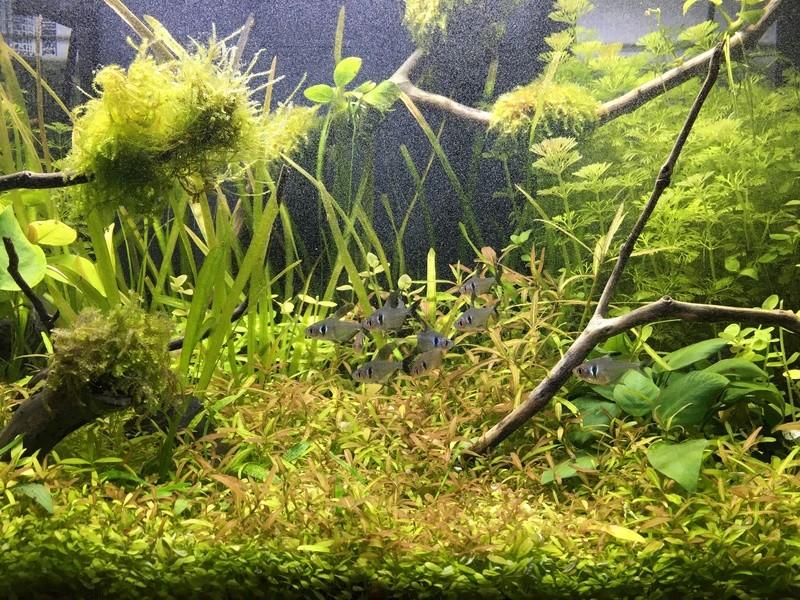 Nouvel aquarium spé RC 60L Img_3418
