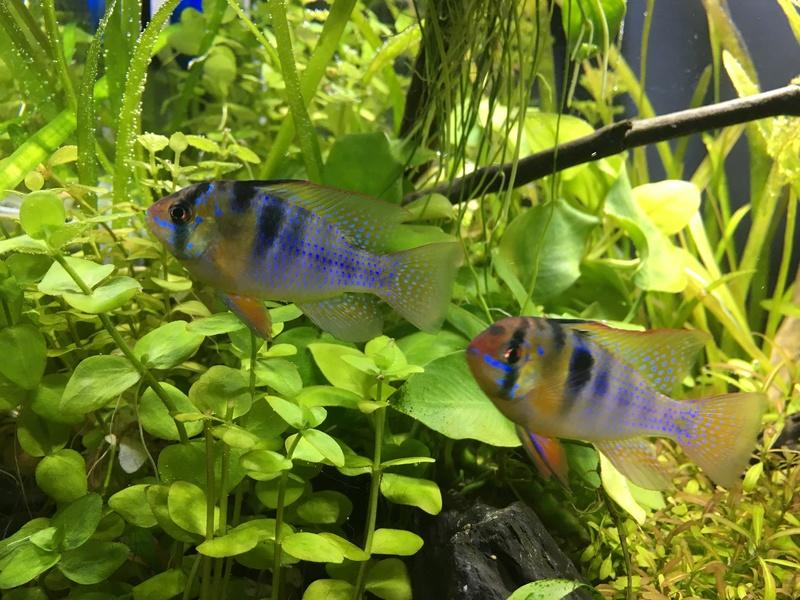 Décor Aquarium 60L Img_3421