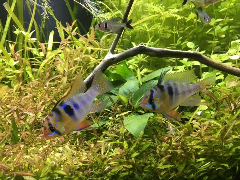 Décor Aquarium 60L Img_3422