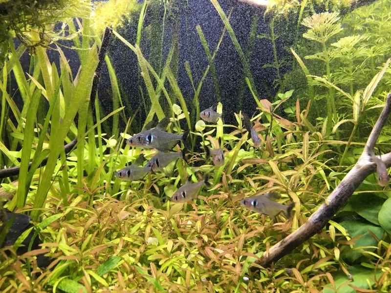 Décor Aquarium 60L Img_3424