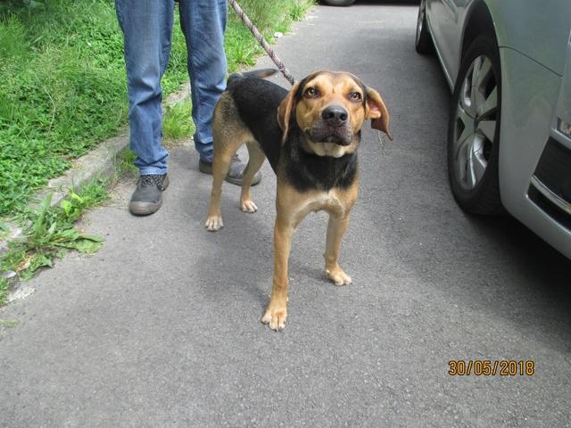 NOUBI (ex Mika) ratier noir et feu male 2 ans  de Béthune -  La Tribu de Sapeur (14) 34090610