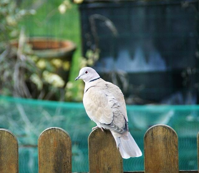 les oiseaux et petites bêtes au cours de nos balades - Page 3 Dsc04811
