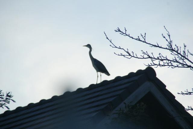 les oiseaux et petites bêtes au cours de nos balades - Page 3 Dsc04814