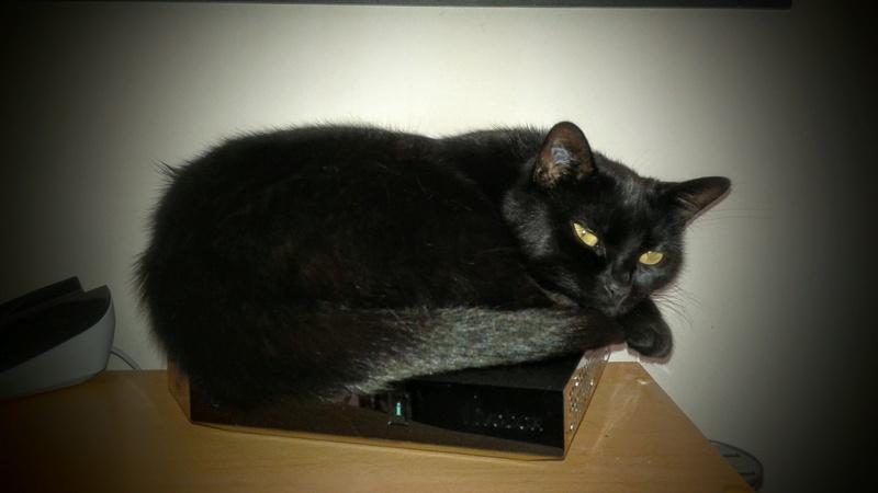 Chatte noire pets