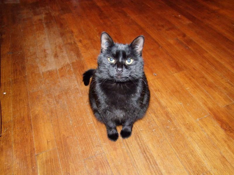 Donnez-moi la chatte noire