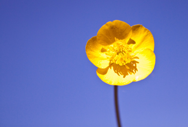 Sun... Flower... Sunflo10