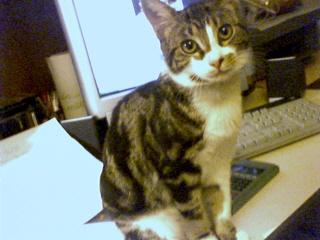 Les aventures de ma chatte...new photo 65129410