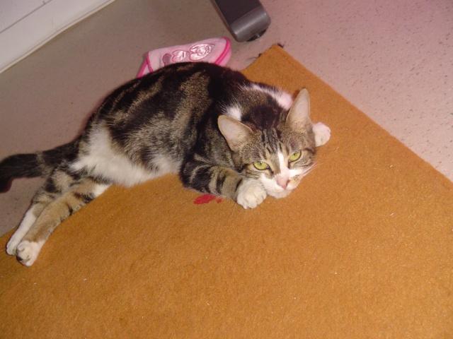Les aventures de ma chatte...new photo Dsc03510