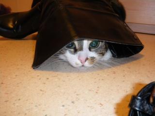 Les aventures de ma chatte...new photo Imgp0210